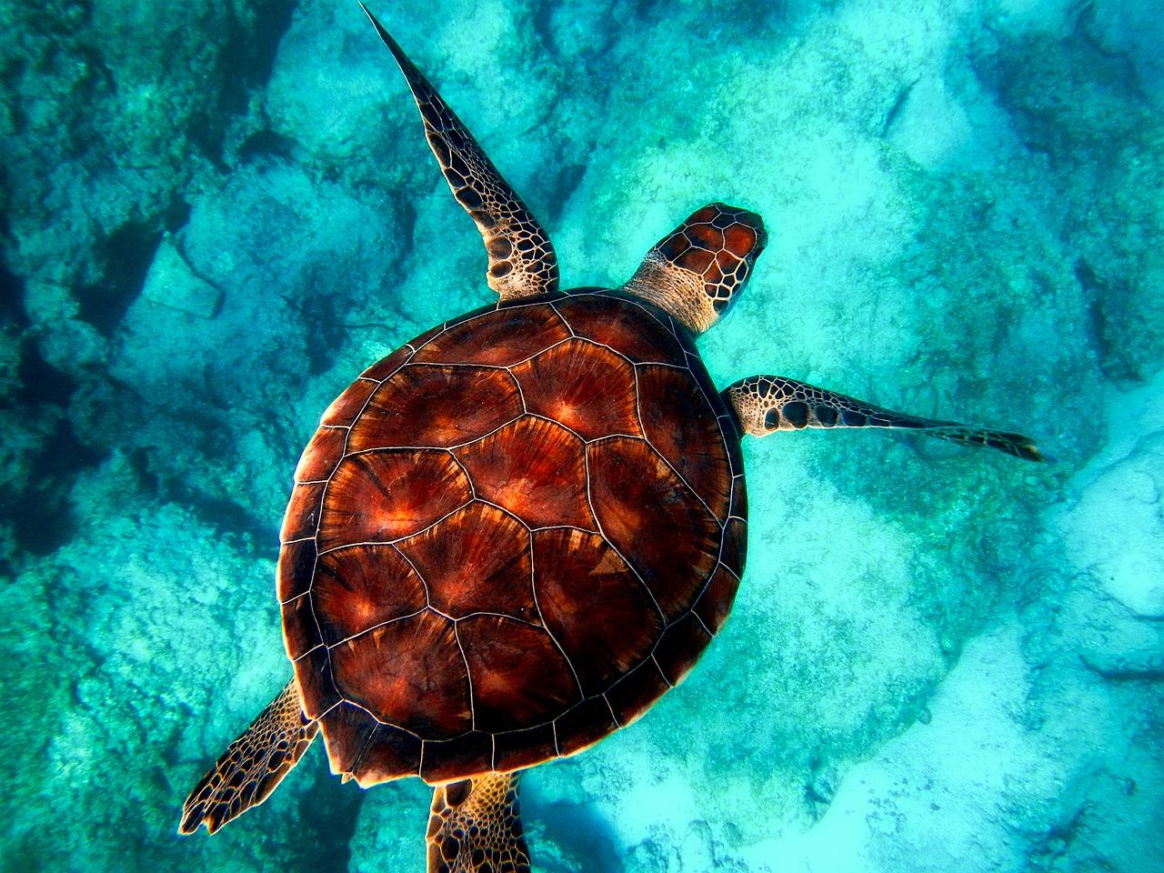 Ciekawostki dotyczące żółwi morskich