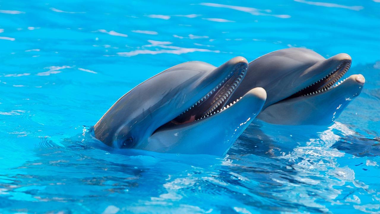 Występowanie delfinów na świecie